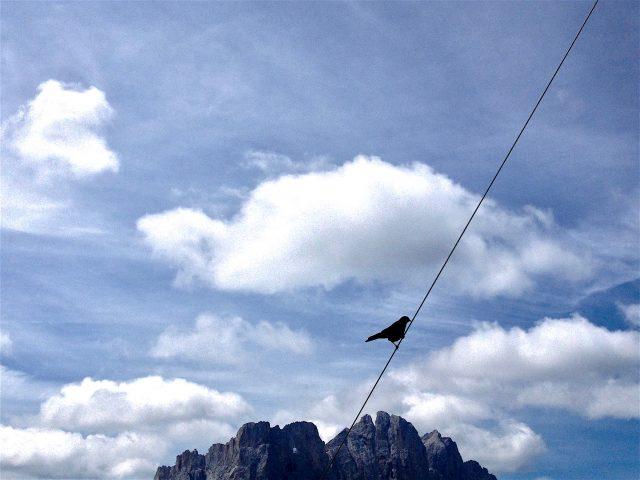 Bird on a Wire (2018)