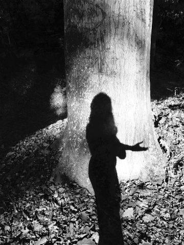 Tree of Wonder   Noir (2018)